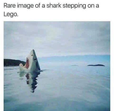 shark lego